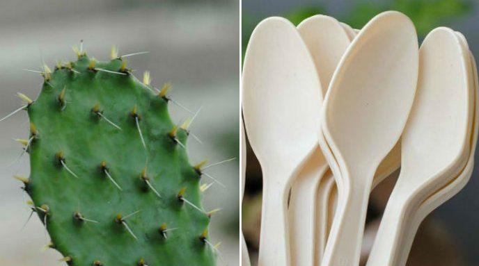 Estudiantes mexiquenses desarrollan cucharas de nopal pro ambientales